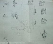Impression ANTIQUE PEINTURE C1880'S Art ANATOMIE gravure illustré dessins corps