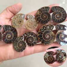1Pair Shell Madagascar Sea Natural Druzy Ammonite Slice Gemstone Specimen Hot