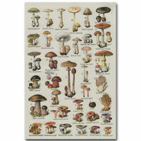 Art Mushroom Breeds Chart Biology Kids Modern Poster 20x30 24x36 P316
