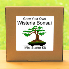Grow Your Own Chinese Wisteria Bonsai Tree Seeds Kit - Indoor Gardening Gift