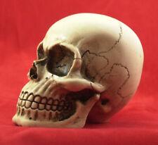 American Made Large Skull Gear Shift Knob Hot Rat Street  Rod 11