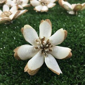 50 Dianthus 2 inch. Dia. Diffuser Flowers Sola Balsa Wood Wholesale Bouquet