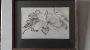 Antique Framed Pencil Drawing Picture of Flower Magnolia Botanical