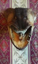 Pike Predatory Fish Hunting Trophy