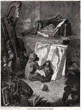 LEZIONE DI LETTURA TRA SCIMMIE. Caricatura.Satira.Capolavoro. Stampa Antica.1861