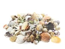 A MIX OF 400 GRAM ASSORTED SMALL AND MEDIUM SIZE SEASHELLS