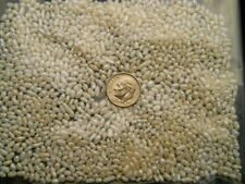 3000 Pearls Drilled Fresh Water Rice Pearls 2.5 MM diameter  Fast USA Shipping