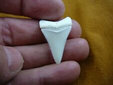 "(s413-27) 1-5/16"" Great White Shark Tooth Teeth Jewelry sharks necklace Modern"