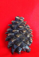 """Cast Bronze Pine Cone"" Unique Sculpture Digger Pine Tree Modern Art Foundry"