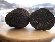 Seeds Mushroom Truffle Black Dried Mycelium Spawn Substrate Russian Ukraine