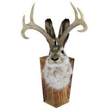 100% Genuine Animal Taxidermy Life Size Jackalope Head Mount Real Antlers