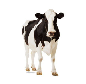 COW STANDUP - 1.6m Party Decoration Farm Animal Cardboard Cutout