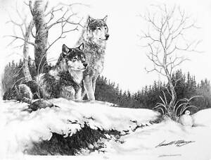 WOLF Wolves pencil drawing Limited Edition Original Artist Signature Wildlife