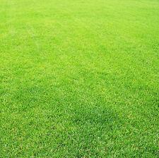 Bluegrass Seed 300 Seeds Greensward Grass-plot Lawn Seed Foliage Plants Hot F004