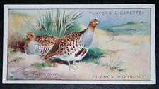 GREY PARTRIDGE       Vintage Colour Card   VGC
