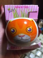 BUZZY GRASS GROW KIT ORANGE CAT COLORFUL JUST ADD WATER NIP GROWS IN 7 DAYS
