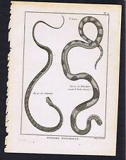 Saturnin-Blanche Panckoucke Snakes 1789