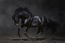 "BEAUTIFUL RUNNING BLACK HORSE MEDIUM CANVAS PICTURE WALL ART  PRINT 20x30"""