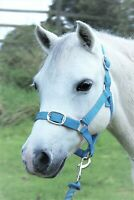 Gallop Headcollar + lead rope set  Size: Full