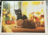 Postcard Animal Cat Kittens on a worktop - posted