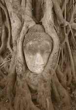 Postkarte: Buddha - Kopf eingewachsen in eine Baumwurzel - Buddha in the tree