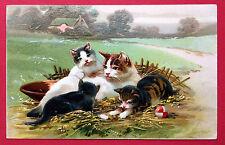 Super Prägedruck AK KATZE 1908 Katzen auf der Wiese    ( 7528