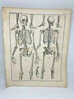 Antique large print HC 1843.Oken's Naturgeschichte Plate 1 Skeleton Anatomy
