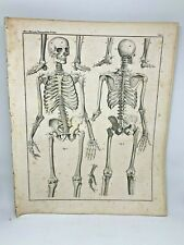 Antique large print HC 1843.Oken's Naturgeschichte Plate 1 Skeleton Anatomy