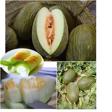 Melon Seeds EXTRA SWEET Spanish Organic Piel de Sapo Fruit