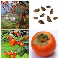 30pcs Easy Growing Persimmon Seeds Non Transgenic Fruit Tree Plants Seed Home