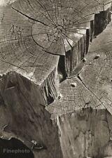 1934/56 Josef Sudek Wood Stump Details Nature Abstract Original Photo Gravure