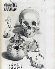 Vintage Medical Illustration Skull Teeth Dental Anatomy Real Canvas Art Print