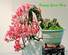Crabapple - 10 Graines Bonsai-Malus honanensis extrêmement arbre unique
