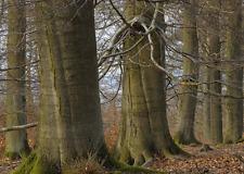 Lentikular -Wackelkarte: Buchen im Kellerwald NP - Beeches in 4 Seasons -Germany