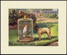 PUG AND PARROT CHARMING LITTLE DOG PRINT MOUNTED READY TO FRAME