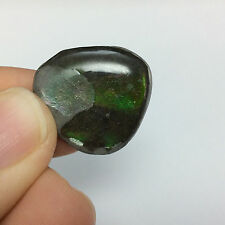 Ammolite Cabochon 170801 Fossil Positive Protection Metaphysical Healing