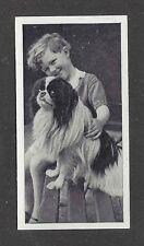 1936 UK Dog & Friend Child Photo Carreras Cigarette Card JAPANESE CHIN SPANIEL
