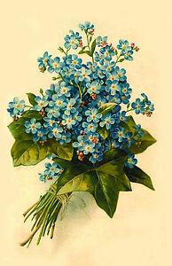 """Waterslide Decals (4pcs 2.5""""x3.5""""each) Forget-me-nots FLONZ 0677 Vintage Flowers"""