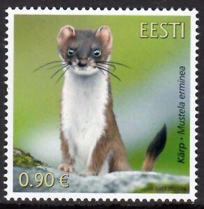 ESTONIA 2021 STOAT WILD ANIMALS ANIMAUX SAUVAGES WILDE TIERE [#2110]