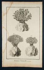 Histoire Naturelle-ORIG grabado alrededor de 1760-polypiers coral mar riff dive