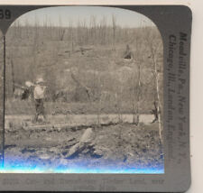 Cut Burned over timber land Duluth MN Keystone Stereoview c1900