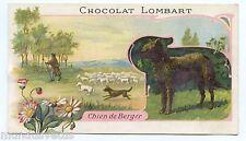 CHOCOLAT LOMBART. Chien de Berger . Sheepdog