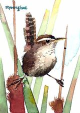 ACEO Limited Edition  - Cute marsh wren