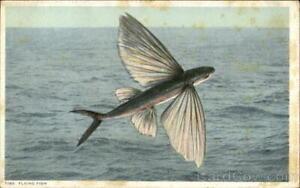 Detroit Pub. Flying Fish Detroit Publishing Co. Antique Postcard Vintage