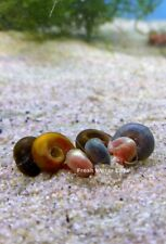 Mix 10+Ramshorn snails (Choose Any of Two Type Snails)+Free Floating Plants