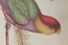 Vintage j Gould litho Parrots