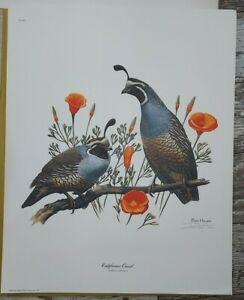 "Ray Harm California Quail Signed Print 16""x20"" Mint Condition Wildlife Art"