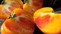10 graines de tomate rare PEPPERMINTcouleur et goût enchanteurs heirloom tomato