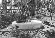 WEST INDIES. Fetish tree, Haiti; spirits of dead inhabit certain trees 1900