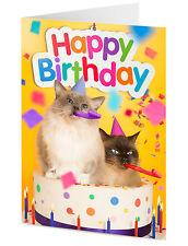 "Due parti RagDoll GATTI emergere da compleanno torta ""Happy Birthday"" greeting card"